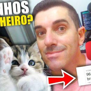 Creative Commons! Como Criar um Canal no Youtube para monetizar de Gatinhos Fofos #gatinhos